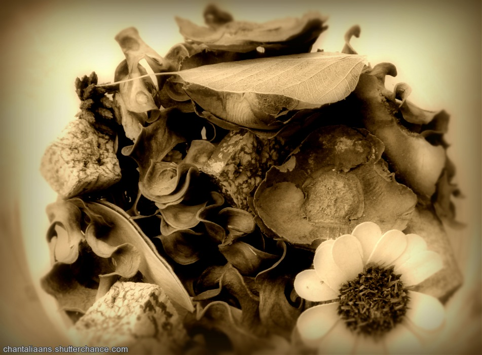 photoblog image Still life in sepia