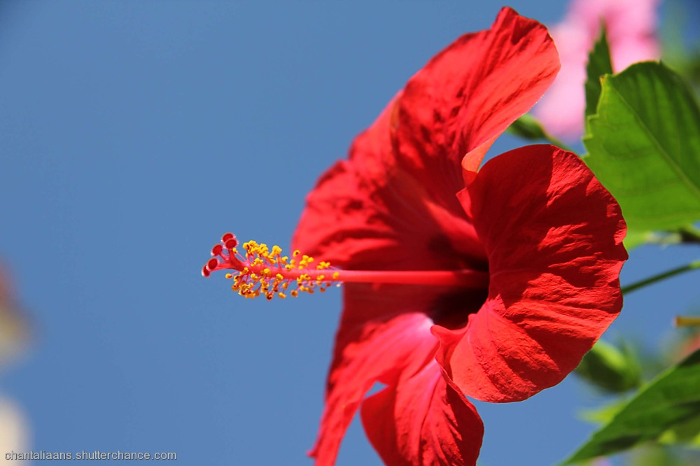 photoblog image Spanish Flower 1/3