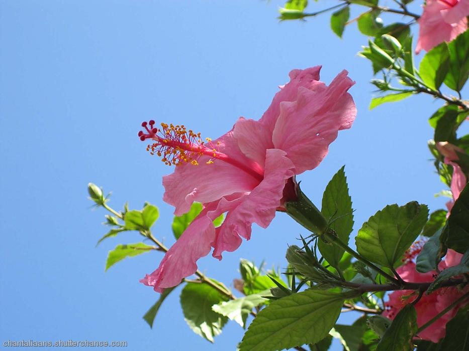 photoblog image Blue versus pink