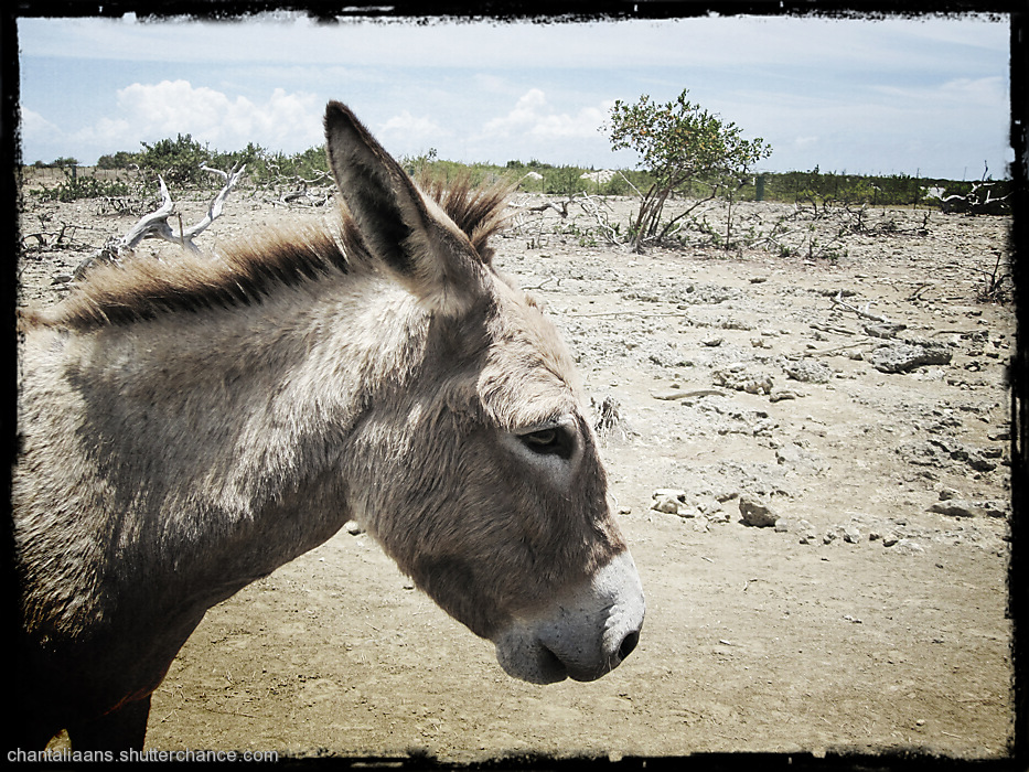 photoblog image Donkeys revisited 4/8
