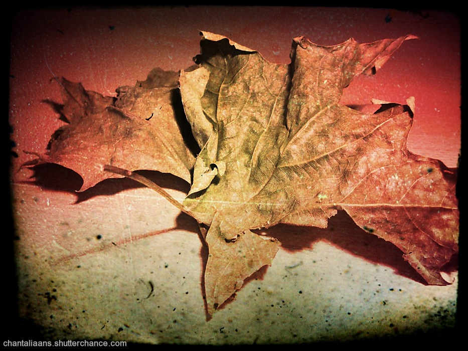 photoblog image Dried leaf 1/3