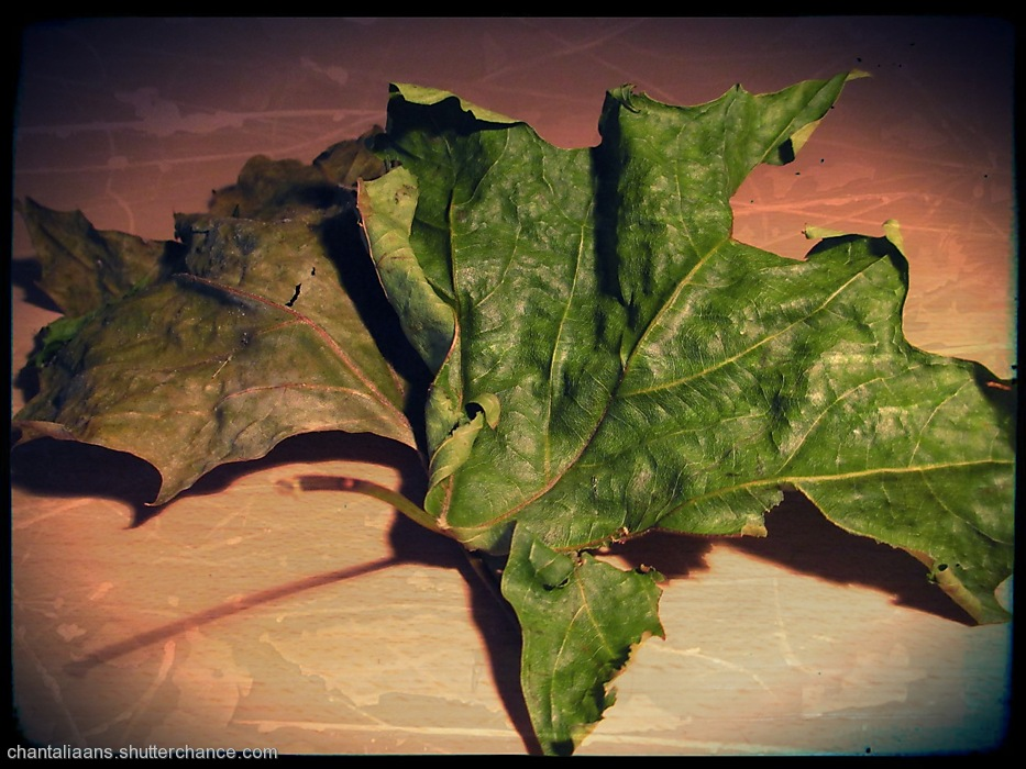 photoblog image Dried leaf 3/3