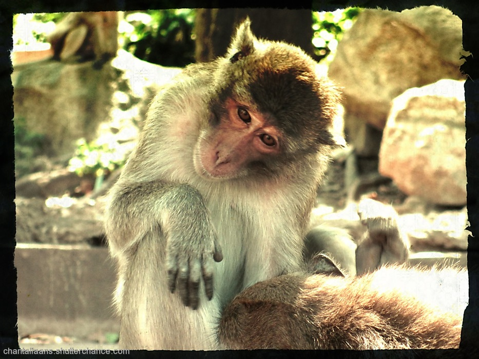 photoblog image A visit to Monkey Mountain near Hua Hin